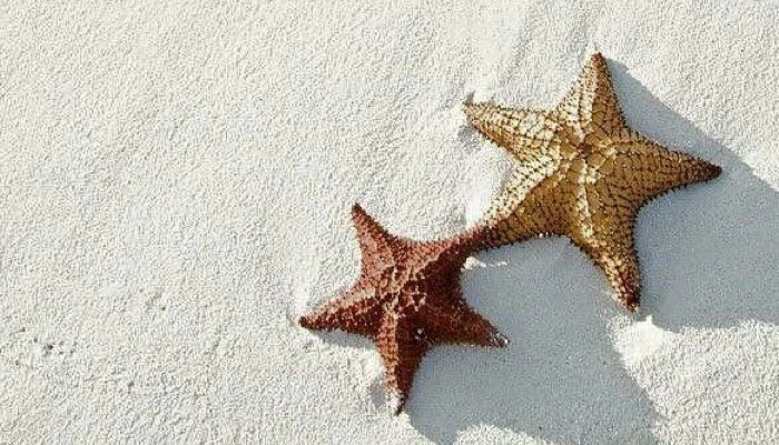 Twin Starfish